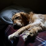 Lo bueno y lo malo de dormir con tu mascota