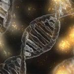 Crean el mayor árbol genealógico del mundo